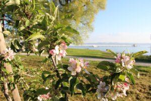 Gretz Communications AG, Thurgau Tourisms: Genussvoll durch den Apfelkanton